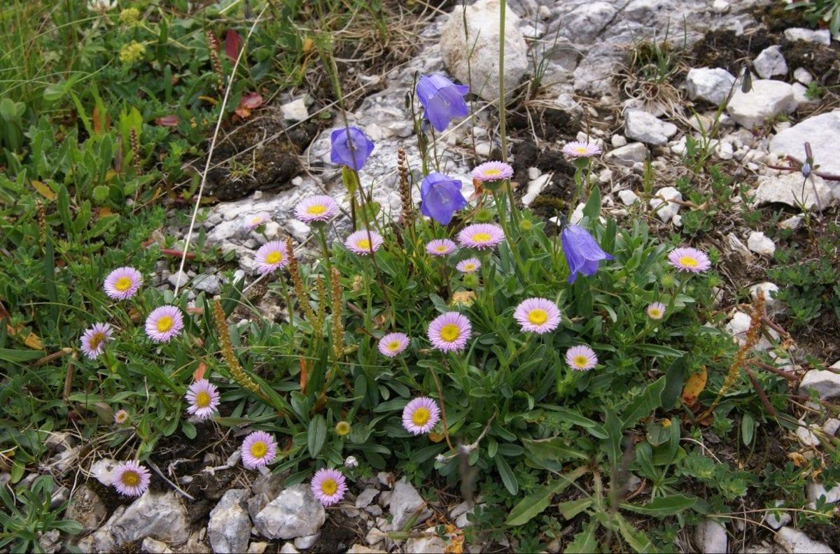 Petzen Flora