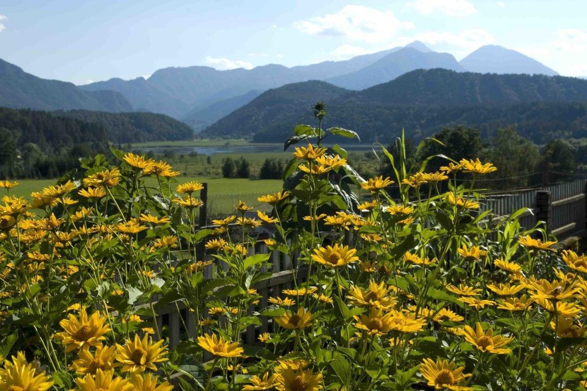 goesselsdorfersee_-©-Tourismusregion-Klopeiner-See-Südkärnten-www.klopeinersee.at_-1-e1502955881504.jpg